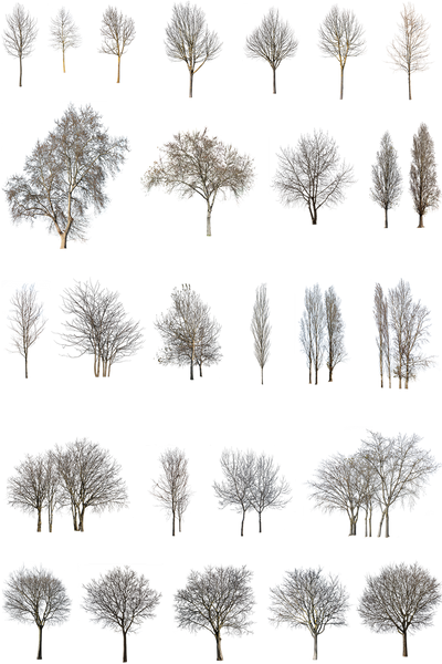 27 WINTER TREES PACK - cutout trees