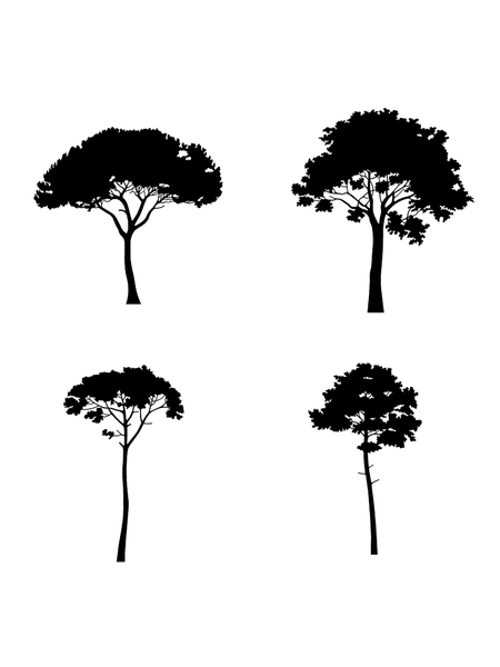 12 Conifer Trees - Vectorial drawings - cutout trees