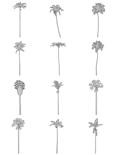 12 Palm Trees - Vectorial Drawings  - cutout trees