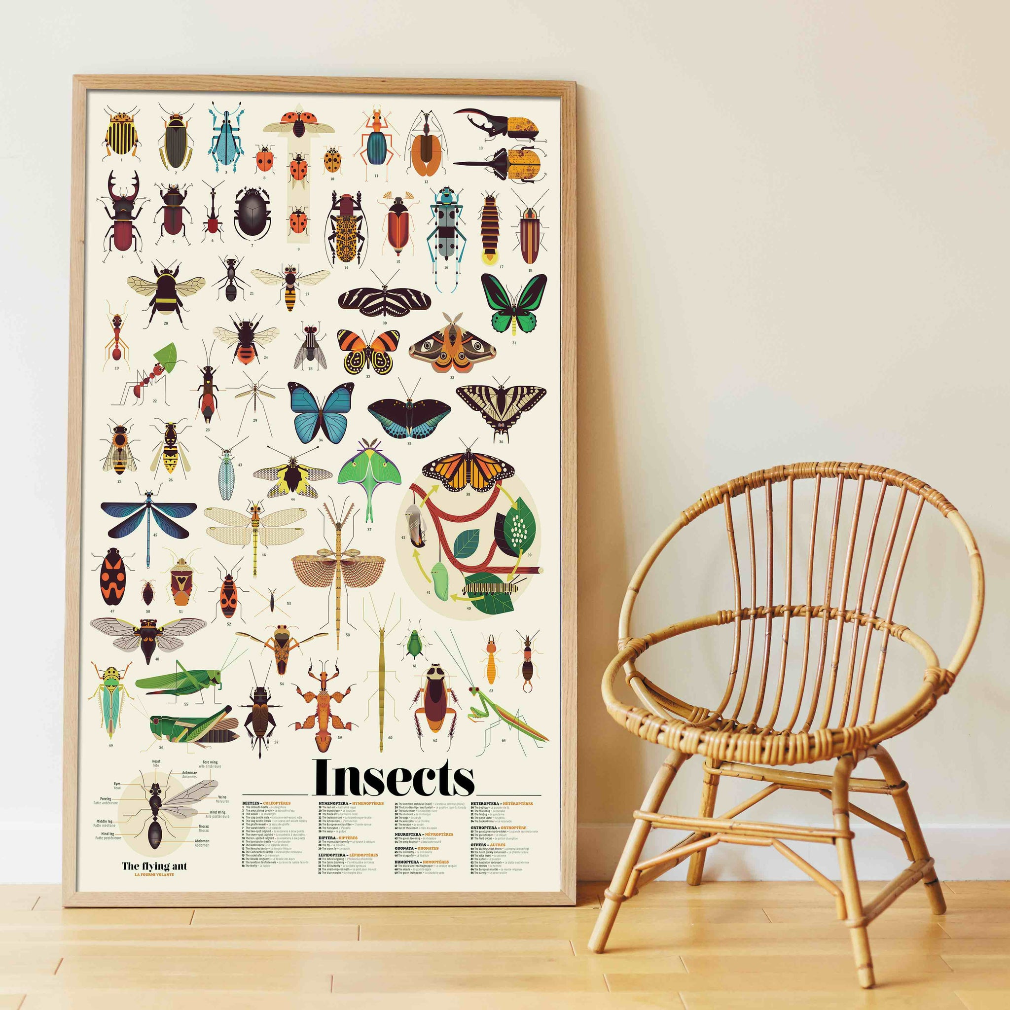 Insect Chart Sticker Poster