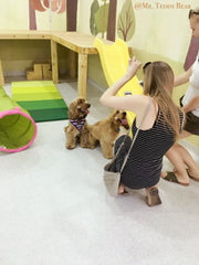 Mr. Teddy Bear Doggy Daycare