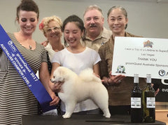 Brisbane Dog grooming Pomeranian award