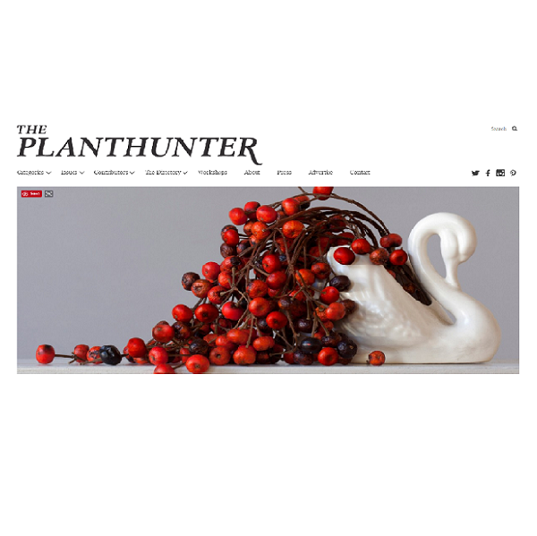 The Planthunter – Imperfection is Perfection