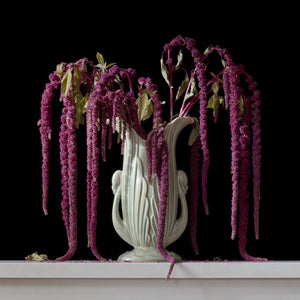 Love Lies Bleeding 9.00am