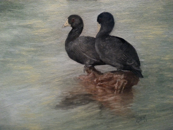 Coots on a Log(Original Painting)