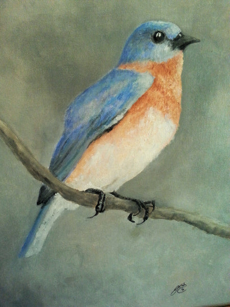 Eastern Blue Jay - JenniPaintings