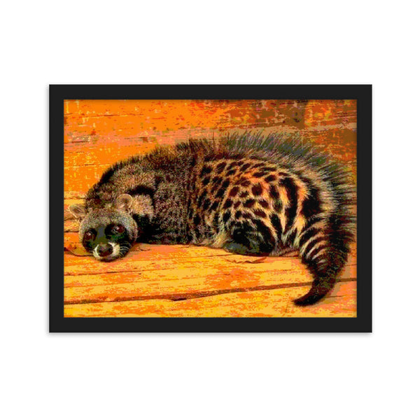 Long Tail Coon(Framed matte paper poster print)