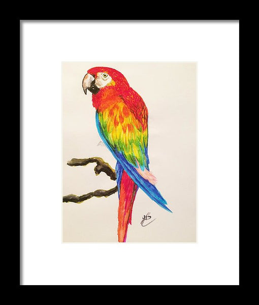 Parrot Pete - Framed Print -JenniPaintings Found Treasures