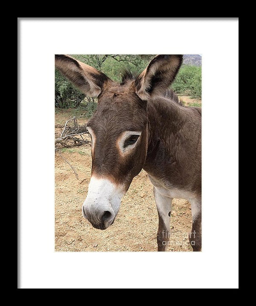 Sweetie Pie - Framed Print