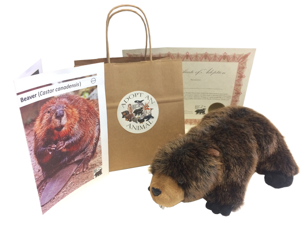 Beaver - Animal Adoption Kit