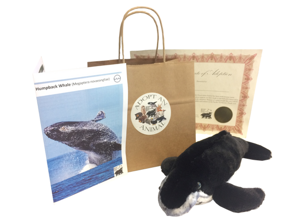 Humpback Whale - Animal Adoption Kit