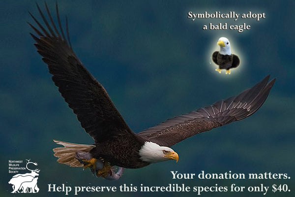 Bald Eagle - Animal Adoption Kit