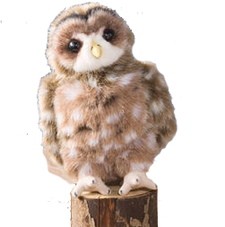 Spotted Owl - Animal Adoption Kit