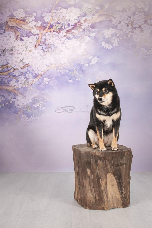 Kate Purple Backdrop Flower Photography Background US