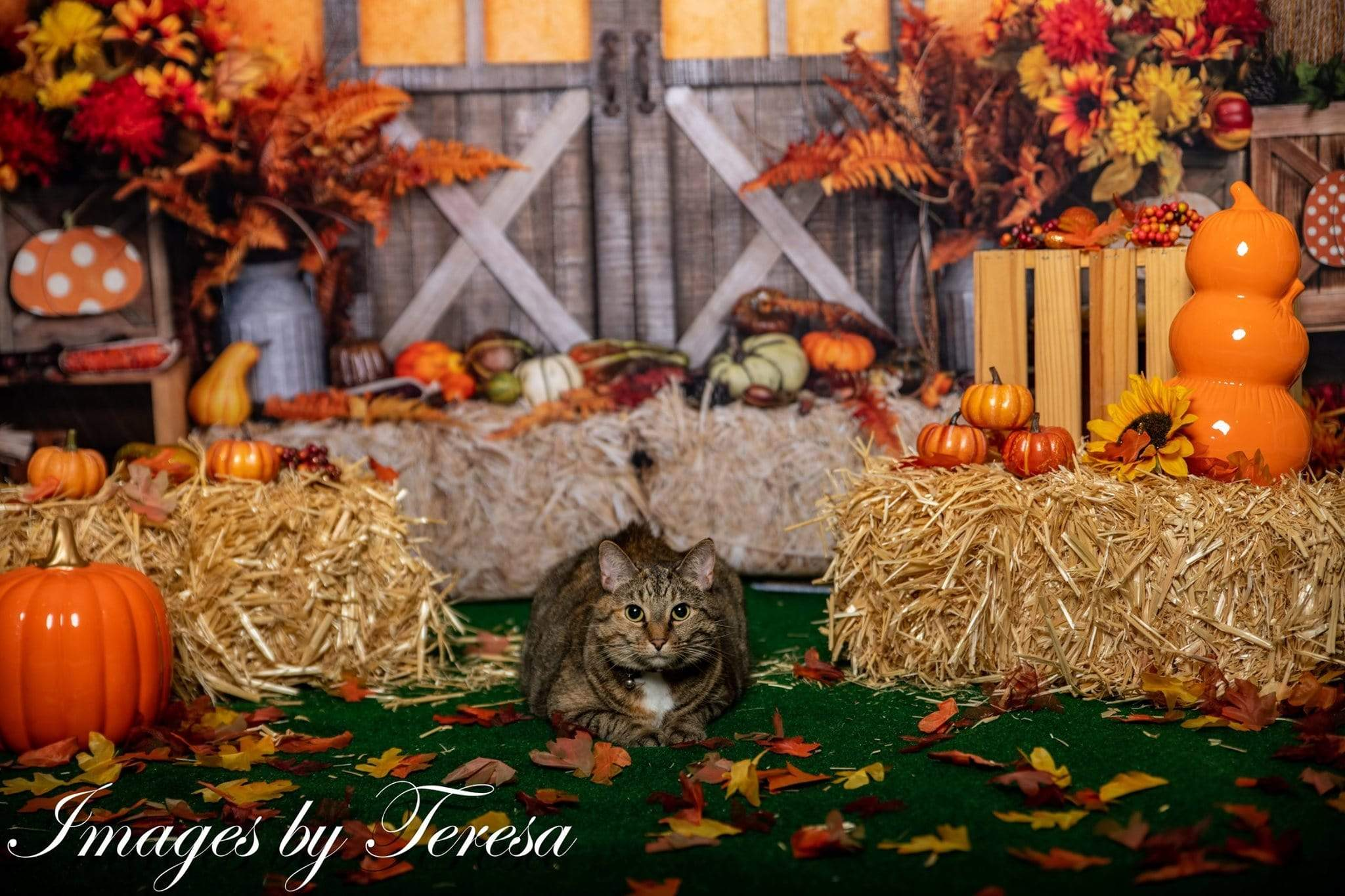 Load image into Gallery viewer, Katebackdrop:Kate Autumn Leaves with Pumpkins Thanksgiving Backdrop