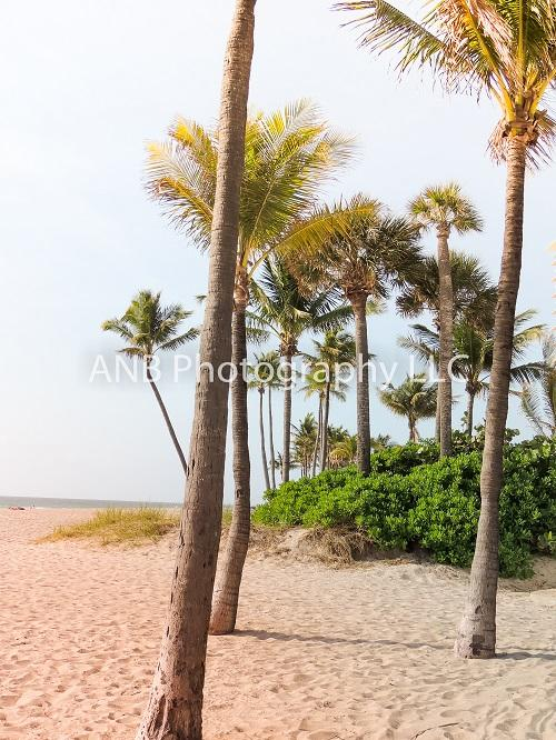 Kate Summer Backdrop Hawaii Beach  for Photography Designed By Alisha Byrem
