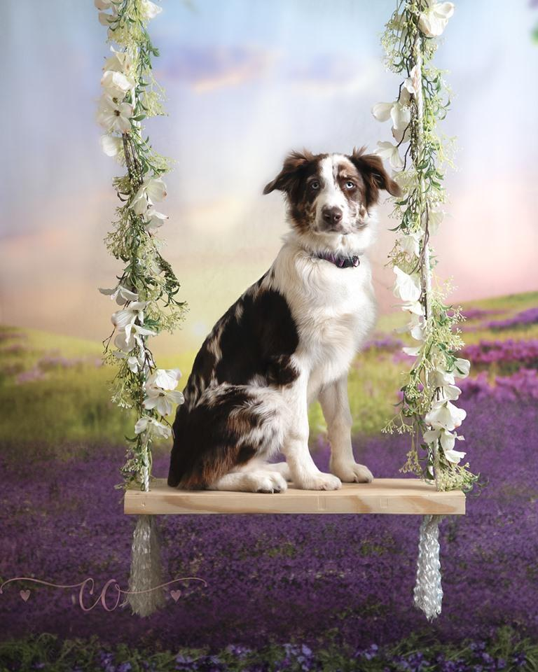 Katebackdrop:Kate Outdoor Purple Florals Scenery Lavender Backdrop