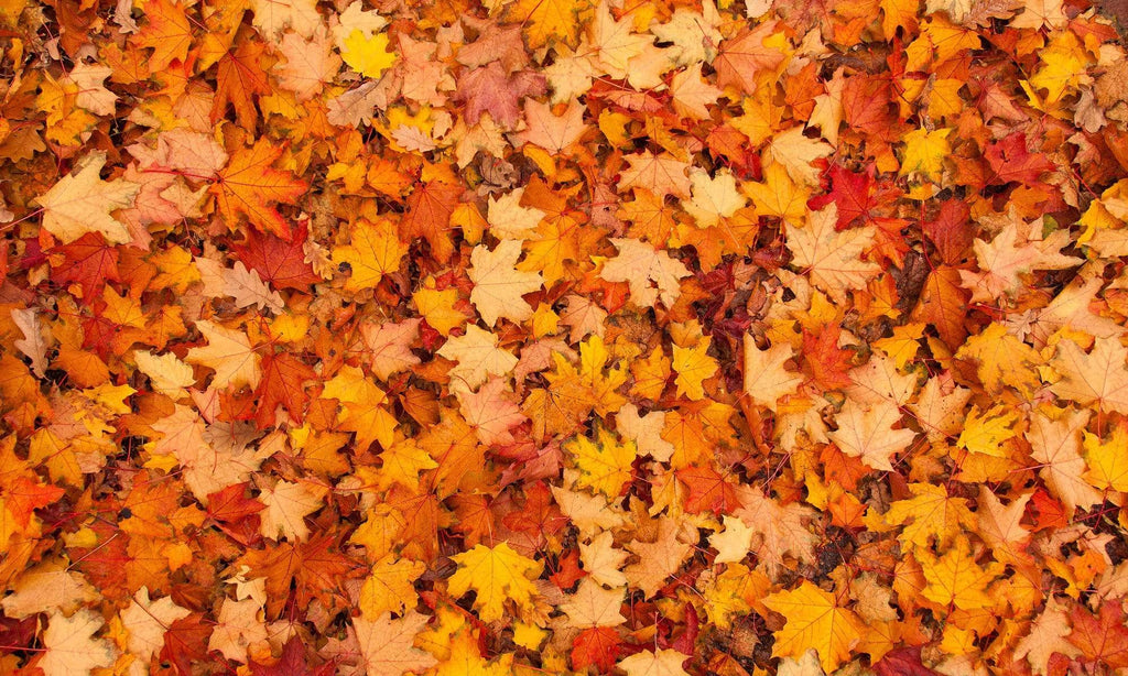 Katebackdrop£ºKate Autumn Maple Leaves rubber floor mat