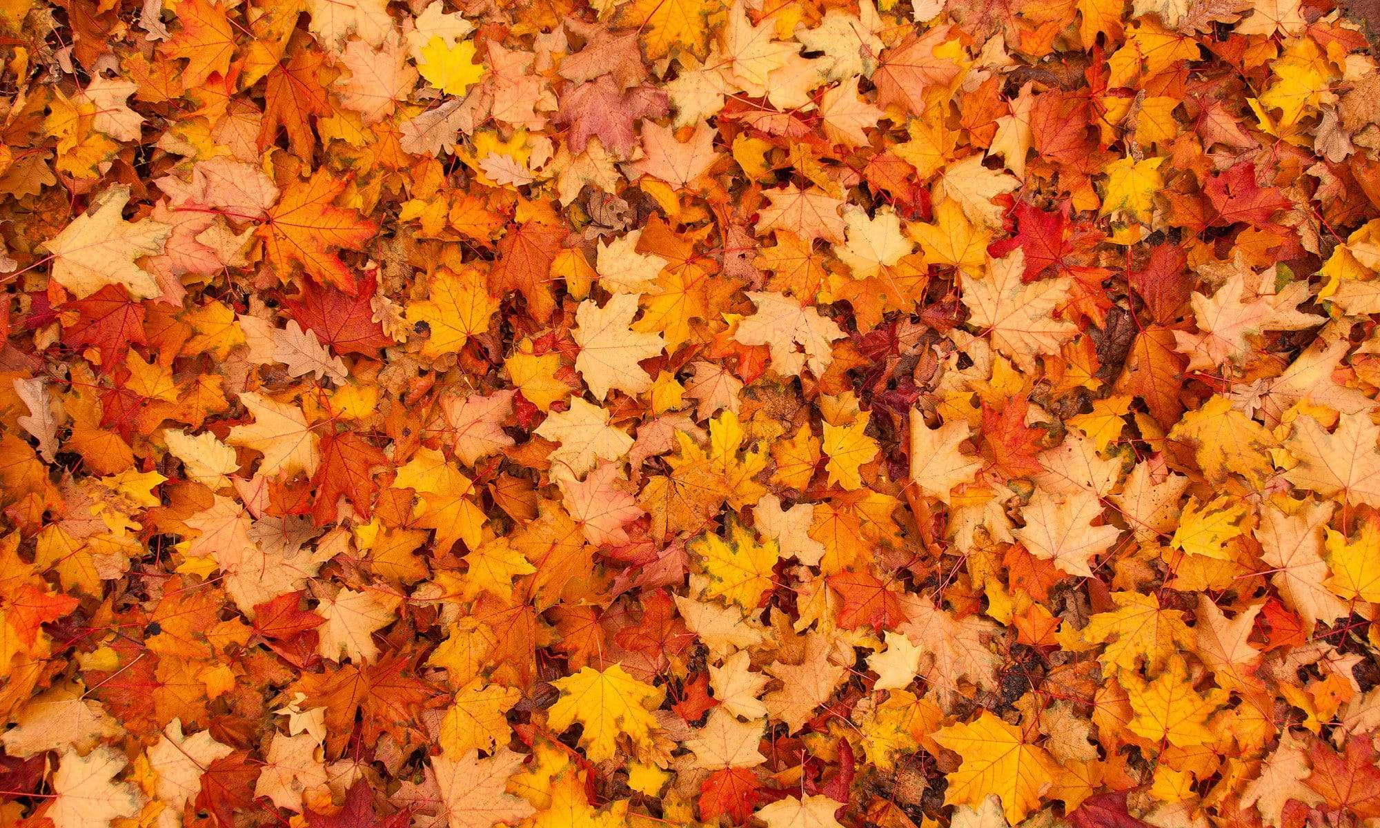 Load image into Gallery viewer, Katebackdrop¡êoKate Autumn Maple Leaves rubber floor mat
