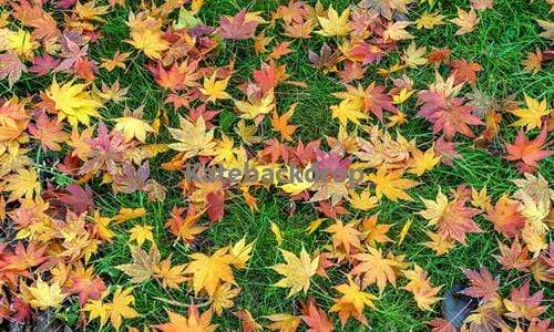 Load image into Gallery viewer, Katebackdrop£ºKate Colorful Maple Leaves Rubber Floor Mat