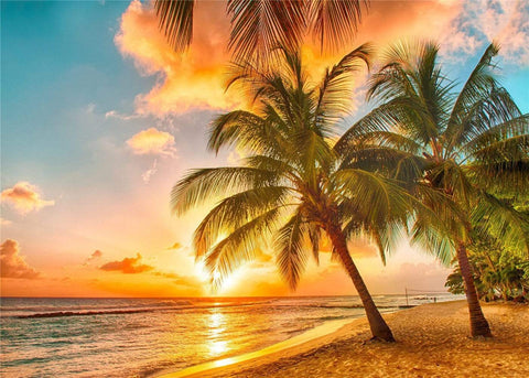 Kate Summer Holiday Coconut trees with Sunset Backdrop