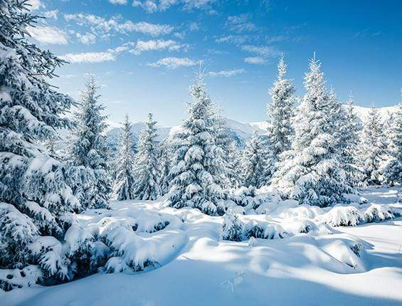 Load image into Gallery viewer, Katebackdrop£ºKate Winter Snow And Pine Trees Backdrop for Photography