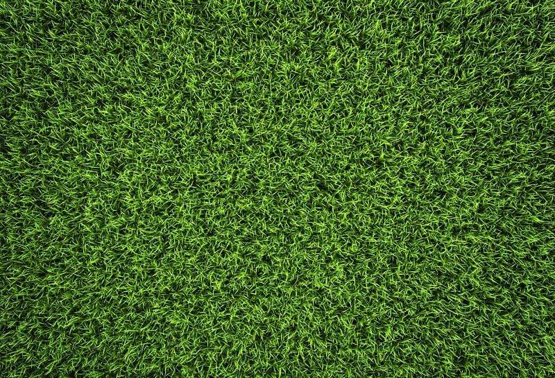 Katebackdrop£ºKate Green Grass Backdrop Background Photos outside