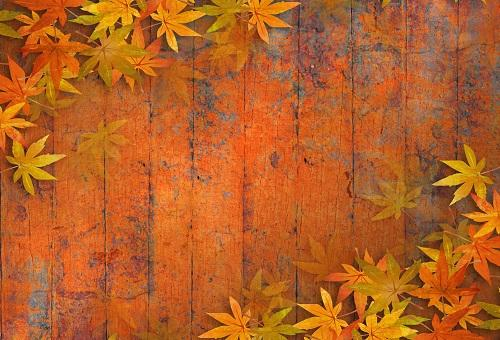 Katebackdrop£ºKate Autumn Maple Leaf Wooden Backdrops for Photography