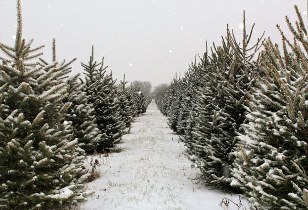 Load image into Gallery viewer, Kate Christmas Pines Tree Farm Path Backdrop for Photography