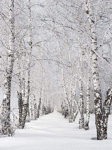 Katebackdrop:Kate Winter Scenic Phtography Tree Snow Photo Background