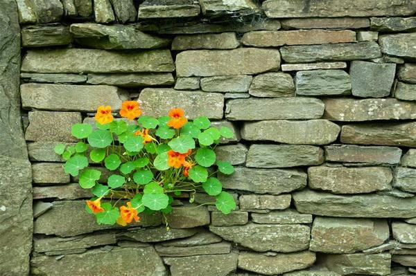 Kate Old Brick Cobbled Wall with Orange Flowers and Greenery Backdrop Designed by Kerry Anderson