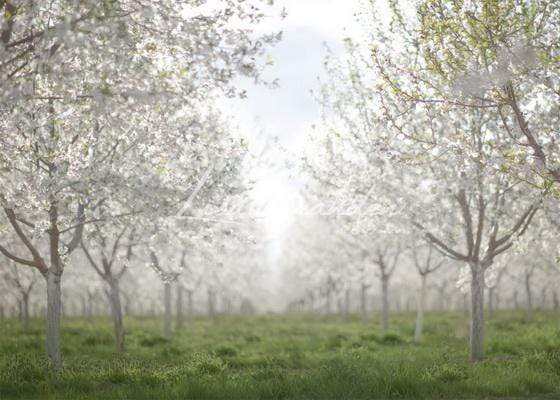 Kate Spring Orchard in White Backdrop for Photography Designed by Lisa Granden
