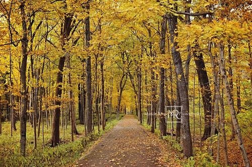 Kate Autumn Backdrop Yellow Trees Path Designed by Mandy Ringe Photography