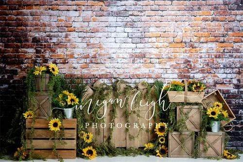 Kate Summer Sunflower Dark Brick Backdrop Designed By Megan Leigh Photography