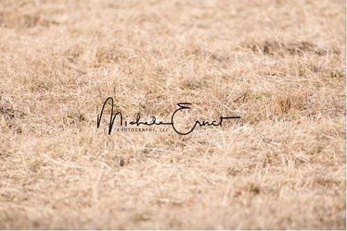 Katebackdrop:Kate Autumn Tundra grass Backdrop Designed By Michele Ernst Photography