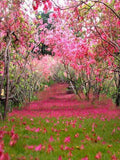 Katebackdrop:Kate Spring Scenery Rose Red Flower Tree for Children Backdrop Photography