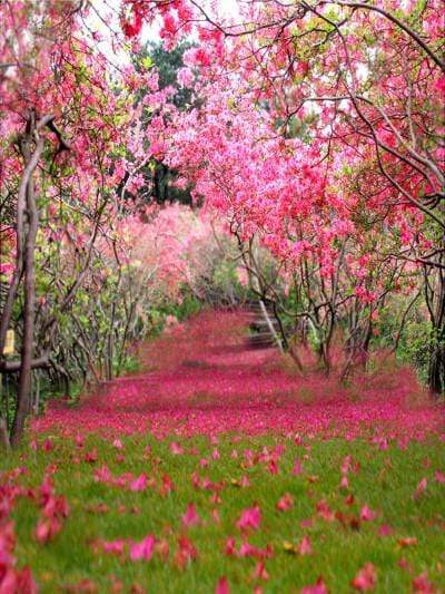 Buy Discount Spring Scenery Rose Red Flower Tree For