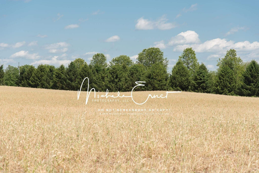Katebackdrop£ºKate Autumn Wheat Field Fun Backdrop for Photography Designed By Michele Ernst Photography