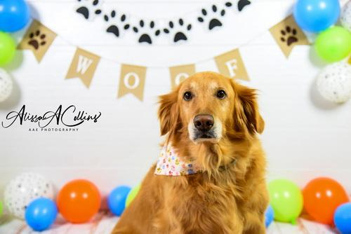 Katebackdrop:Kate Neutral Dog Balloons Decorations Backdrop Designed by AAE Photography