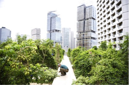 Singapore is the first country to create Organic Standards for produces grown in urban and indoor environment