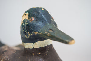 An Early English Hand made Polychrome Duck Decoy of Plaster construction.