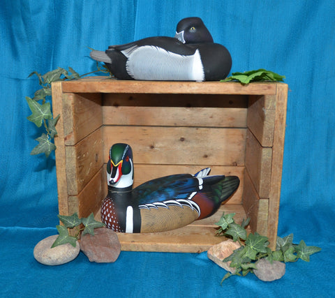 Wood Duck Drake and Ringneck Drake