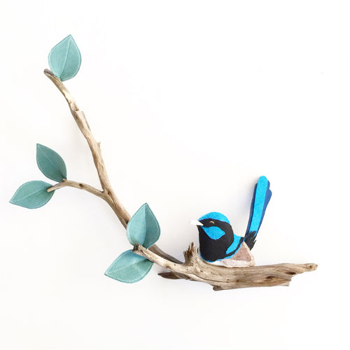 Blue Wren on on a branch