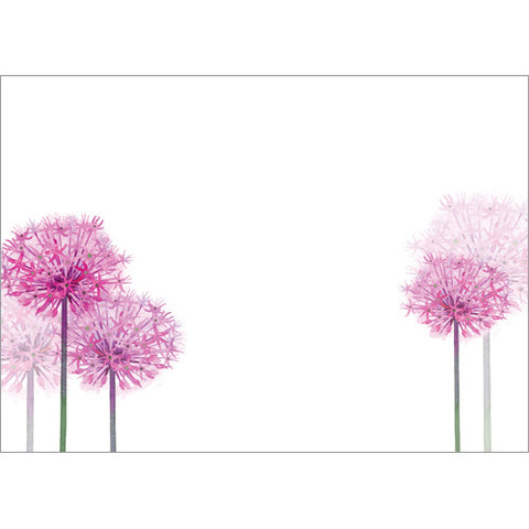 Alliums (Pack of 10 note cards)