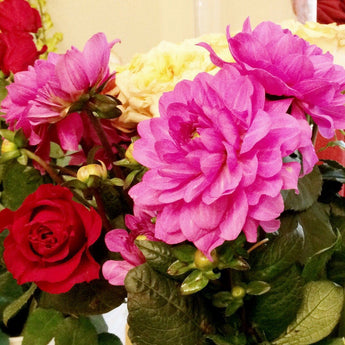 Skirted Dahlias Dancing with Roses