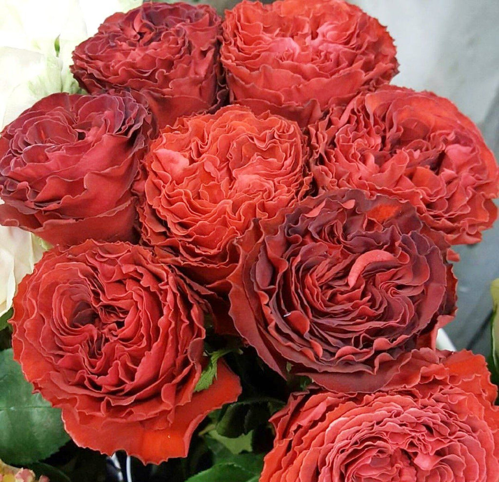 Samarcanda Roses from the Royal Bounty Collection - VineLily Moments