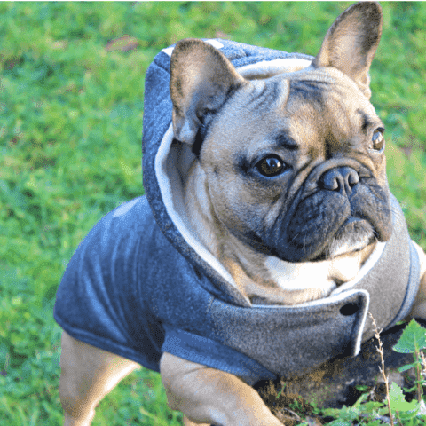Image of manteau à capuche d'hiver -  - Lovely bouledogue