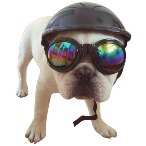 Image of Casque de protection pour Bouledogue Français / Carlins -  - Lovely bouledogue