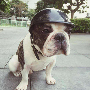 Casque de protection pour Bouledogue Français / Carlins -  - Lovely bouledogue