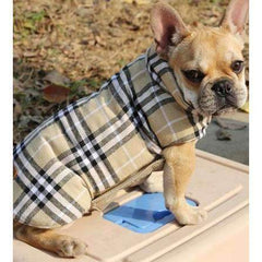 manteau d'hiver -  - Lovely bouledogue